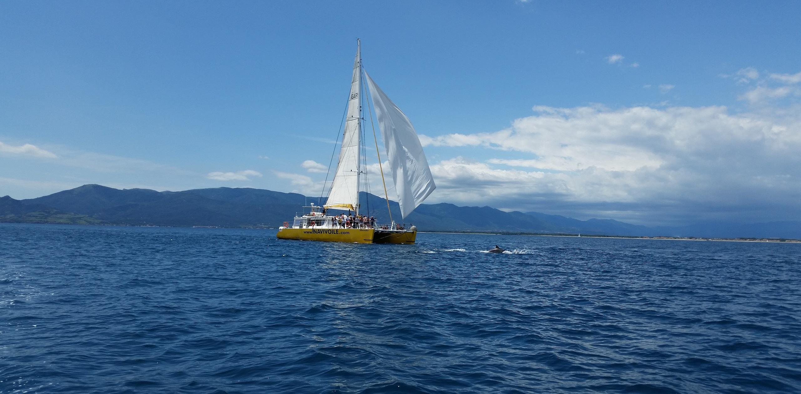 catamaran navivoile promenade en bateau dans les pyrenees orientales au depart de canet en roussillon et port vendres croisiere a la rencotre du grand dauphin au large de collioure