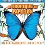 le-tropique-du-papillon