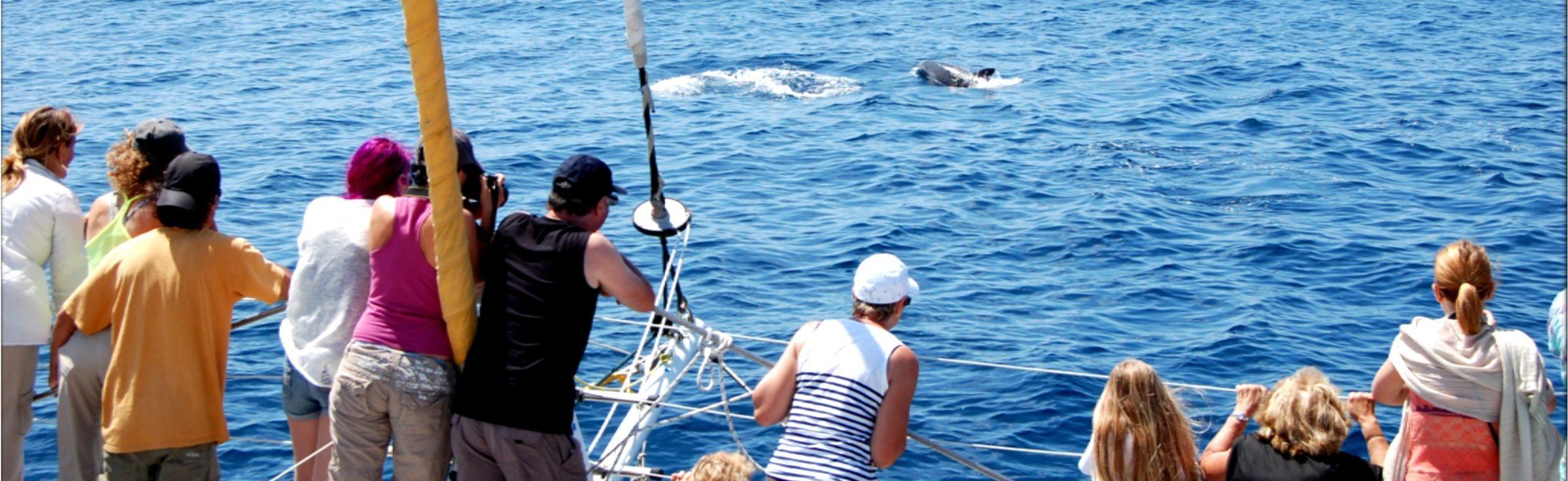 catamaran navivoile croisière à la rencontre du grand dauphin au départ de canet en roussillon