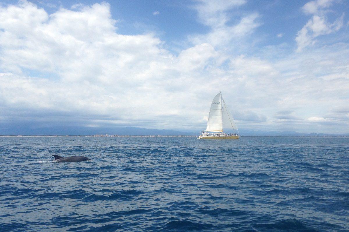 catamaran navivoile croisiere chante avec les dauphins au depart de canet en roussillon avec vue sur bateau et grands dauphins proches de la cote vermeille