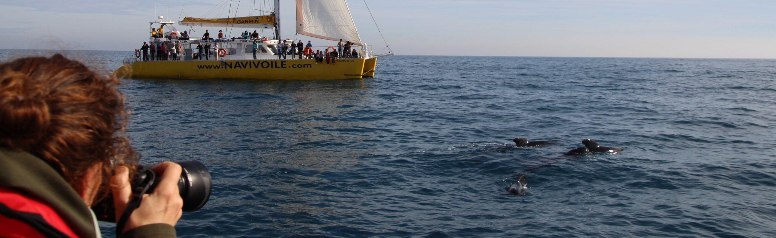 catamaran navivoile croisière chante avec les dauphins au départ de canet en roussillon