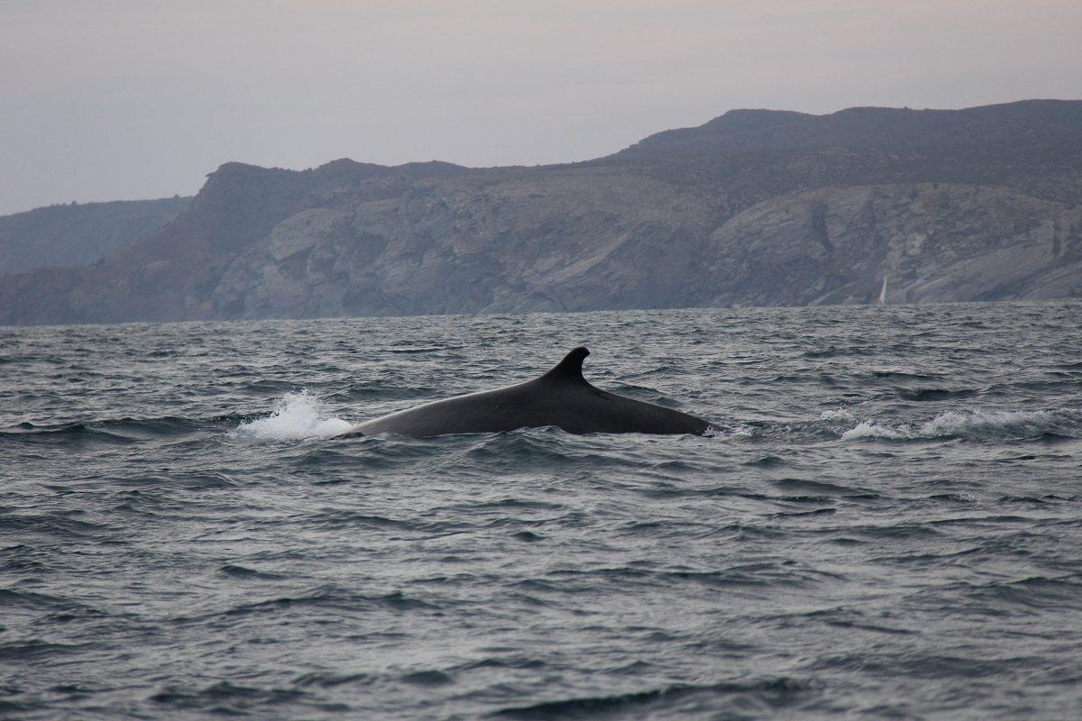 catamaran navivoile croisiere chante avec les dauphins au depart de canet en roussillon observation baleine rorqual commun au large de la cote rocheuse