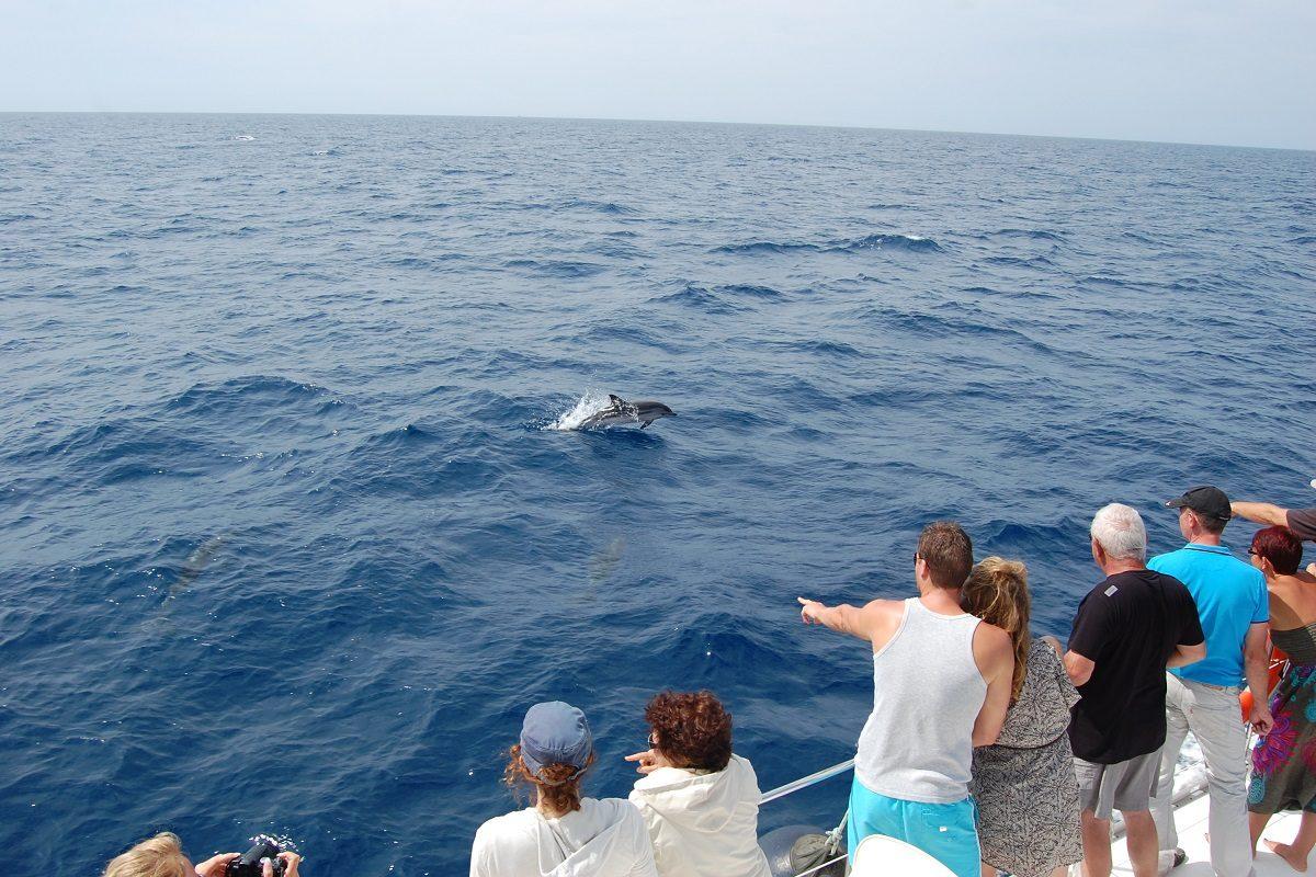 catamaran navivoile croisiere chante avec les dauphins au depart de canet en roussillon observation dauphin bleu et blanc venant aux etraves du bateau