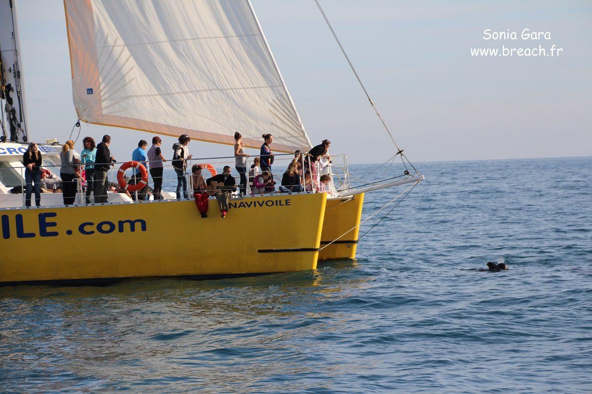 catamaran navivoile croisiere chante avec les dauphins au depart de canet en roussillon observation globicephales noirs a la voile