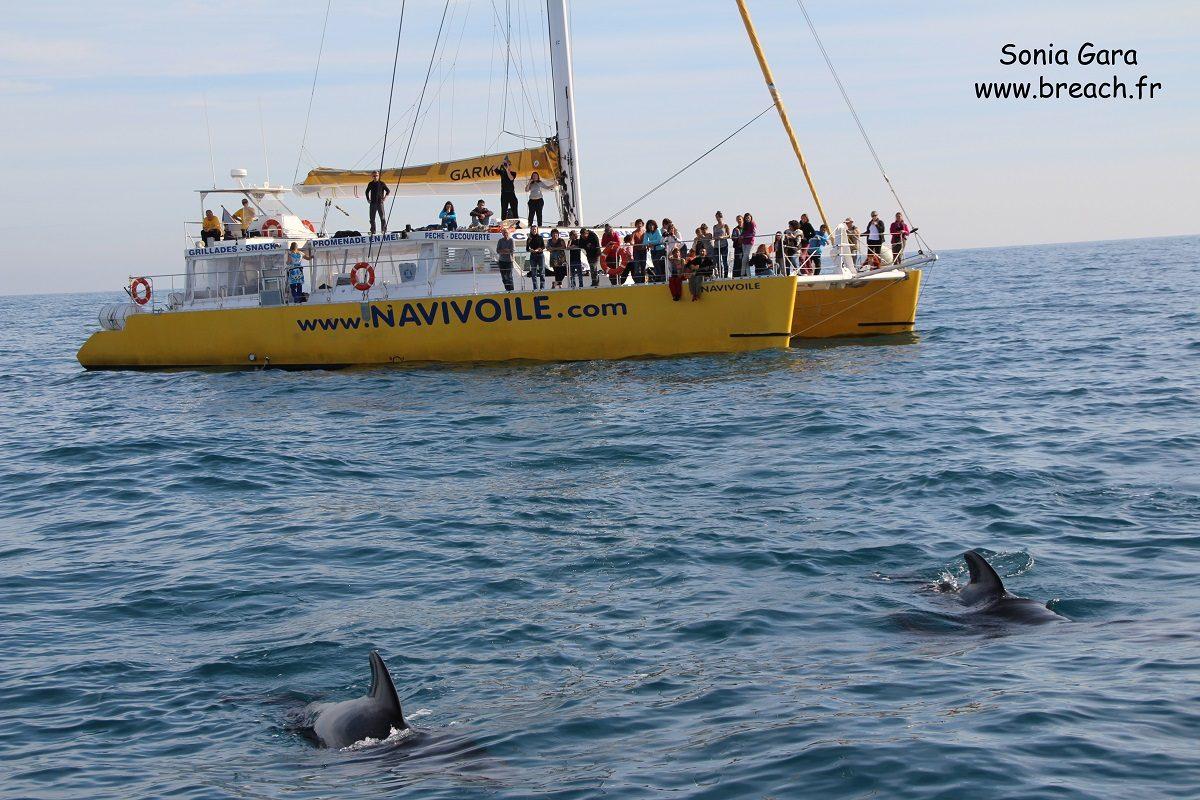 catamaran navivoile croisiere chante avec les dauphins au depart de canet en roussillon observation globicephales noirs en derive au large des pyrenees orientales