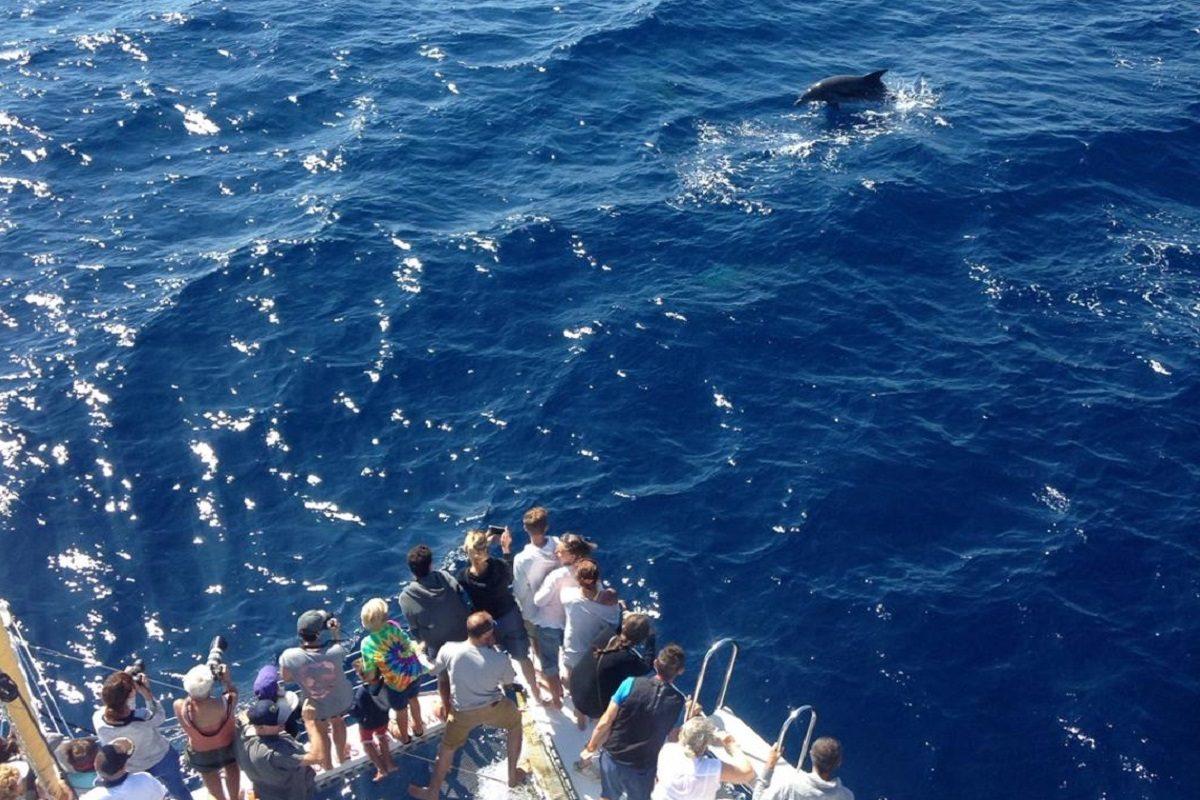 catamaran navivoile croisiere chante avec les dauphins au depart de canet en roussillon observation grand dauphin_tursiops truncatus s'approchant des etraves du bateau
