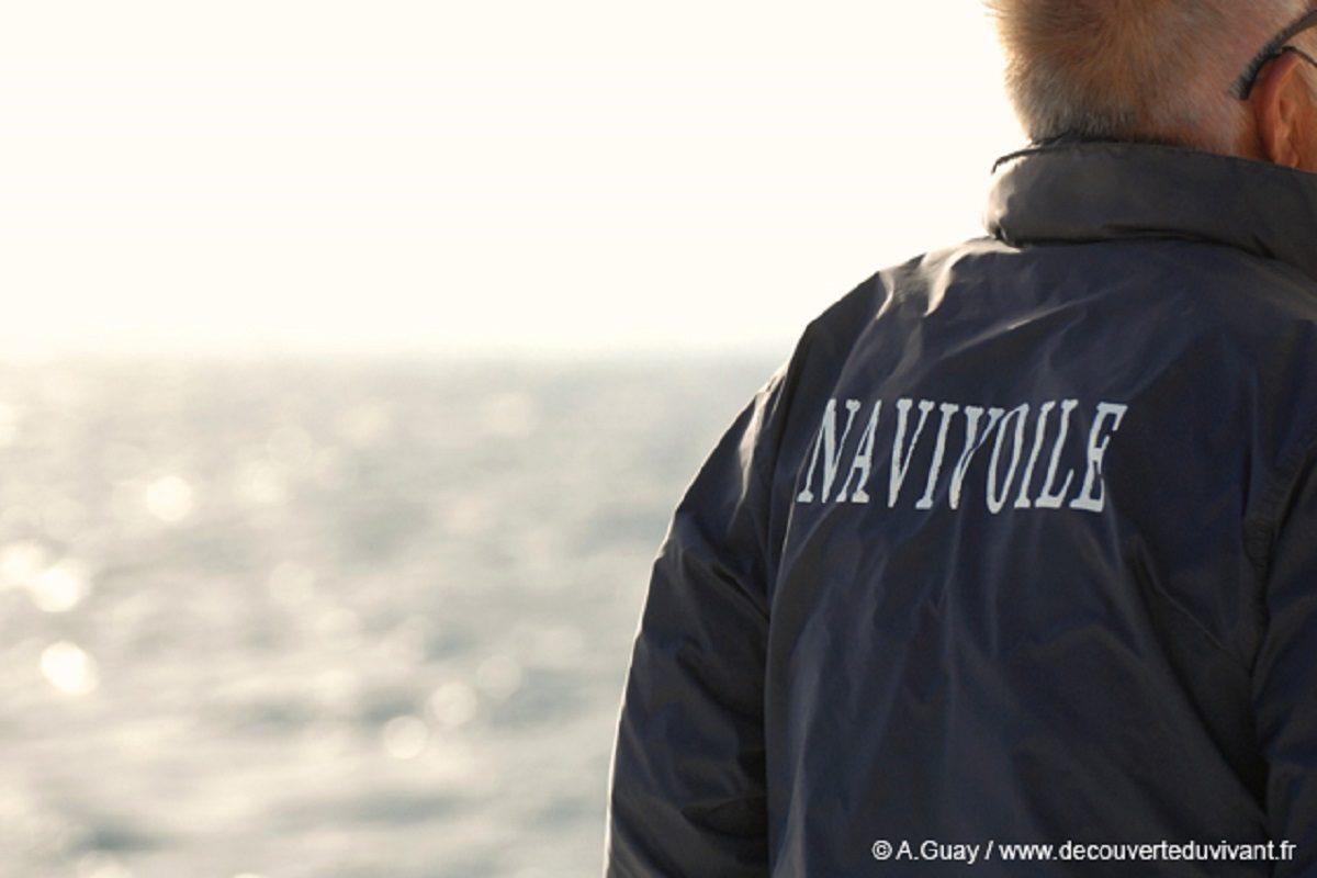 catamaran navivoile observation baleines et dauphins au depart de canet en roussillon avec armateur du bateau