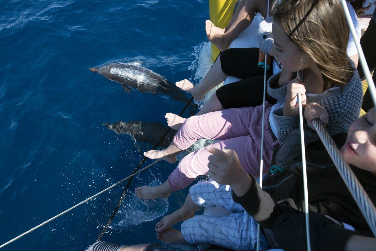 catamaran navivoile observation baleines et dauphins au depart de canet en roussillon avec dauphins a l'etrave au pied des enfants