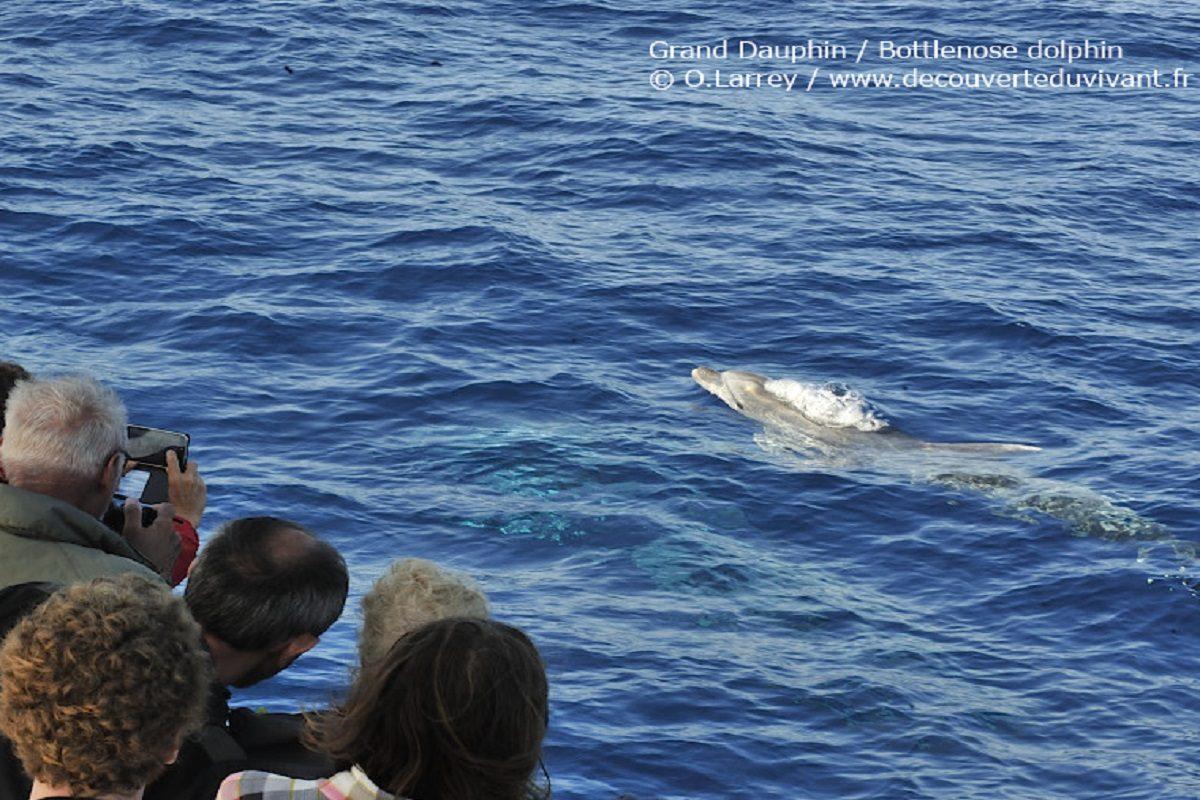 catamaran navivoile observation baleines et dauphins au depart de canet en roussillon avec grand dauphin_bottlenose dolfin