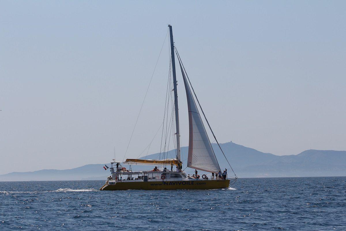 catamaran navivoile observation baleines et dauphins au depart de canet en roussillon en phase de recherche