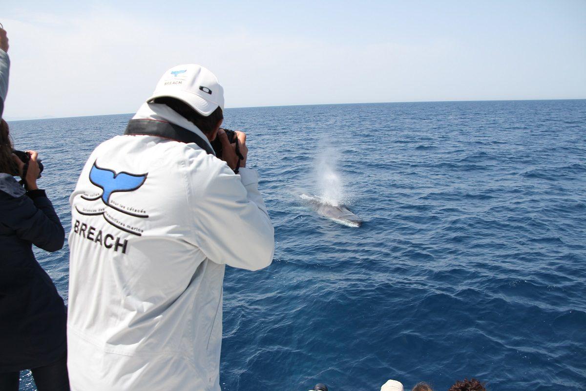 catamaran navivoile observation baleines et dauphins au depart de canet en roussillon photo association BREACH avec baleine_rorqual commun tableau arriere du bateau