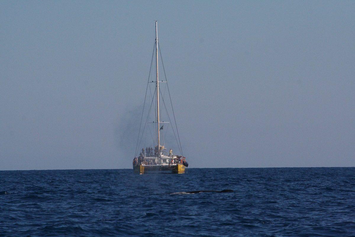 catamaran navivoile observation baleines et dauphins au depart de canet en roussillon photo association BREACH avec souffle baleine devant le navivoile