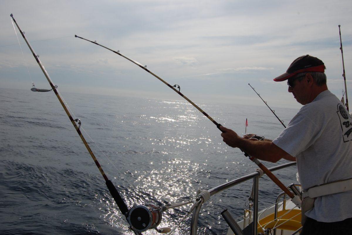 catamaran navivoile peche au gros a la traine rapide au large des pyrenees orientales et au depart du port de canet en roussillon poisson pris en fin de journee