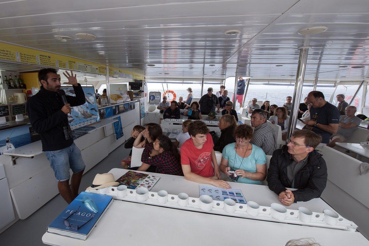catamaran navivoile sortie a la rencontre du grand dauphin au depart de canet en roussillon ou port vendres conference pedagogique a bord du navire