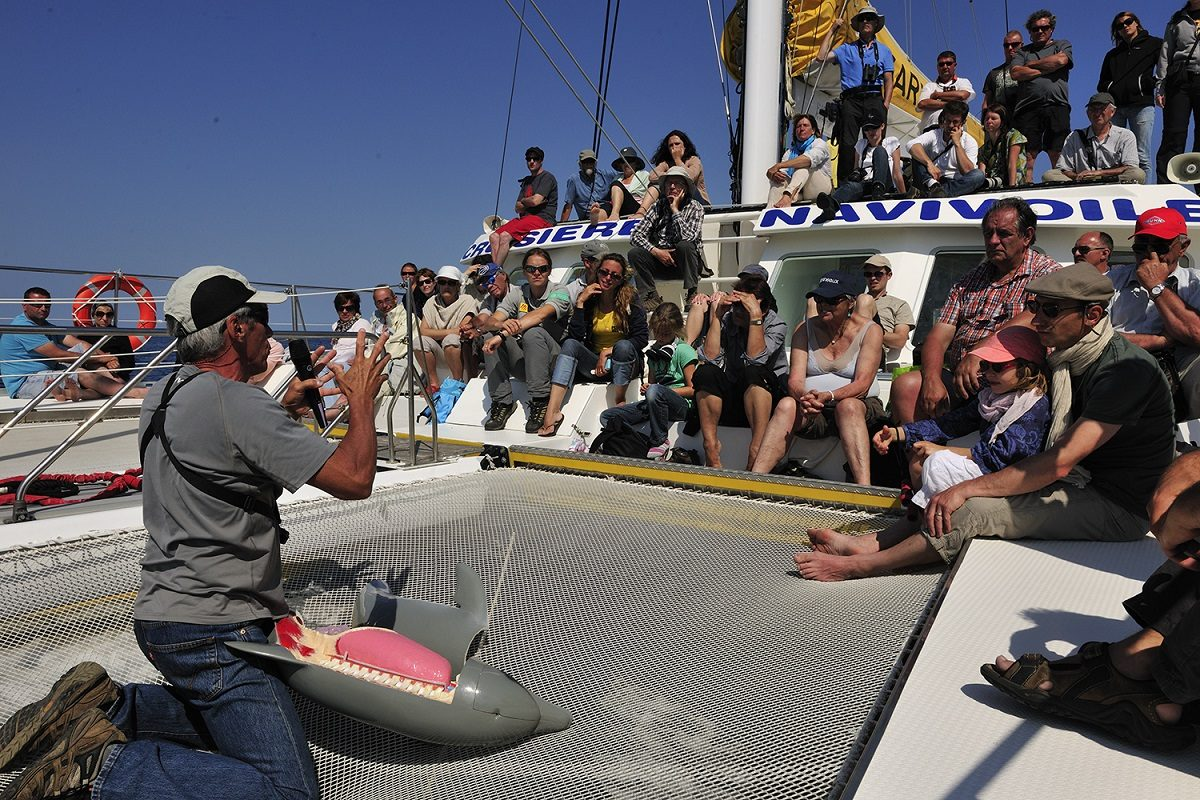 catamaran navivoile sortie a la rencontre du grand dauphin au depart de canet en roussillon ou port vendres explications public biologie du grand dauphin