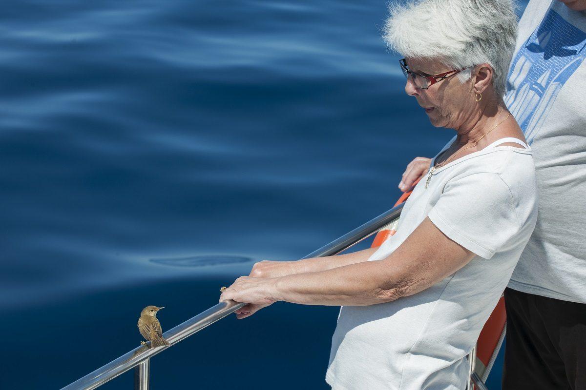 catamaran navivoile sortie a la rencontre du grand dauphin au depart de canet en roussillon ou port vendres petit passereau pose sur la rambarde
