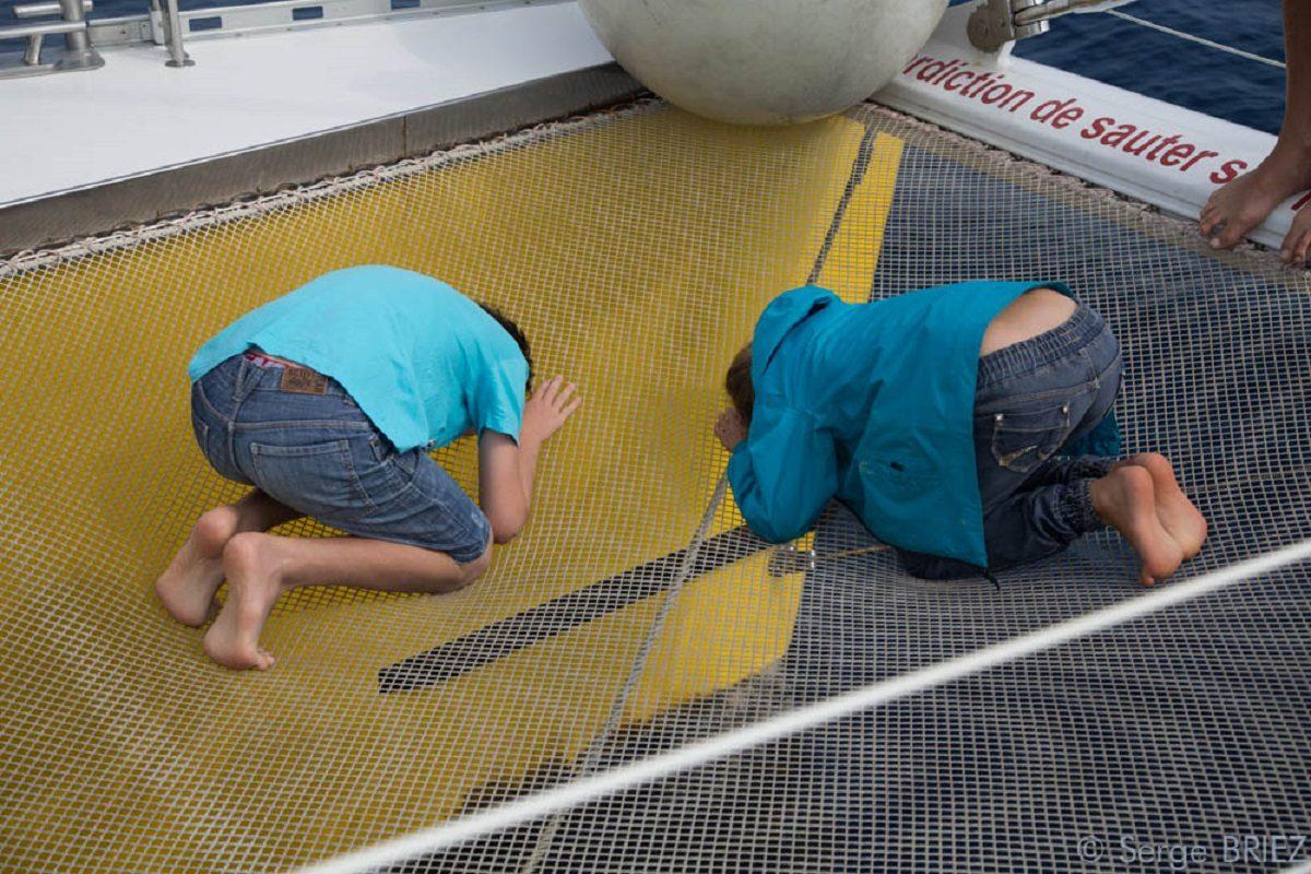 catamaran navivoile sortie a la rencontre du grand dauphin au depart de port vendres ou canet en roussillon avec enfants observant les dauphins au travers des filets