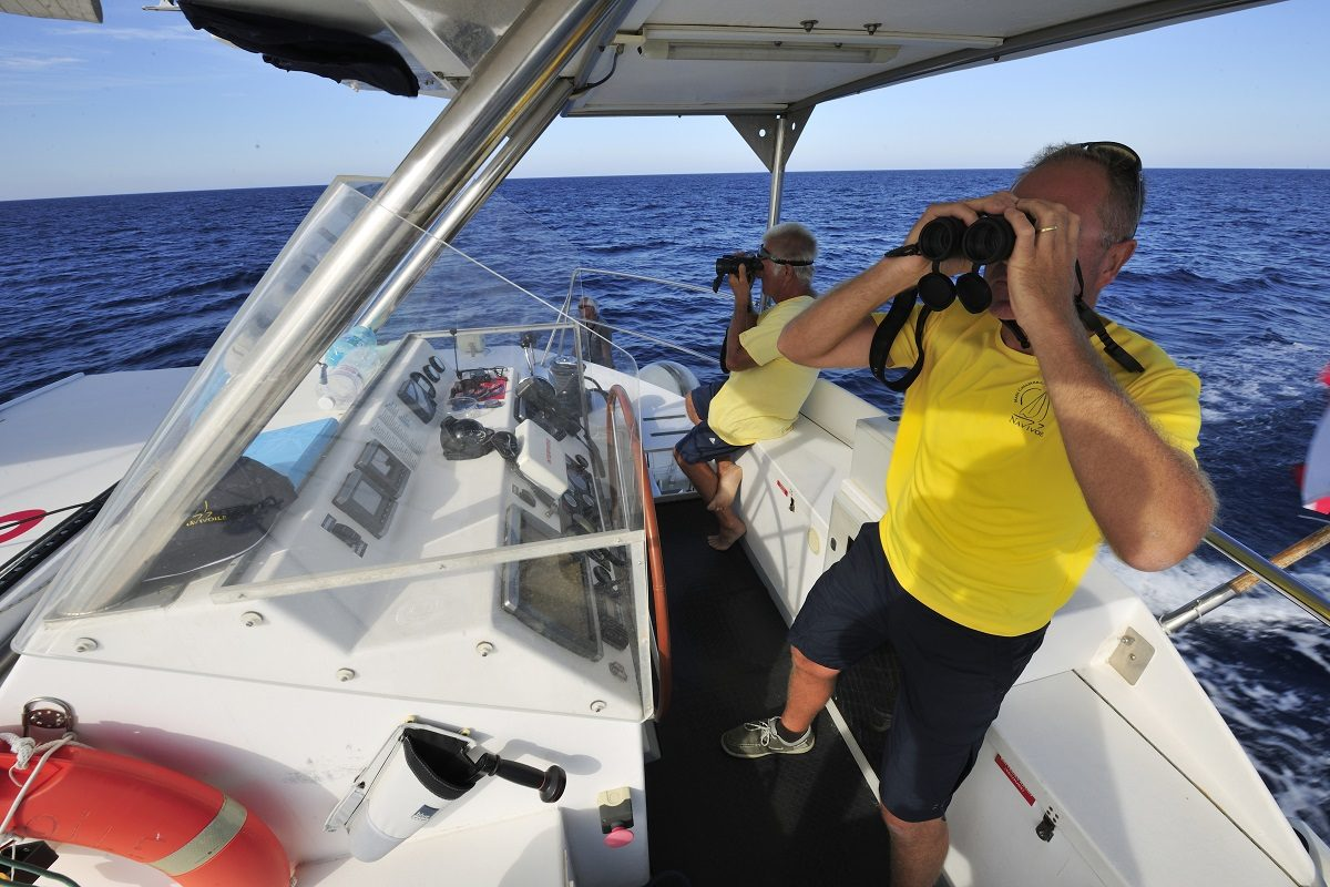 catamaran navivoile sortie a la rencontre du grand dauphin au depart de port vendres ou canet en roussillon equipage en observation