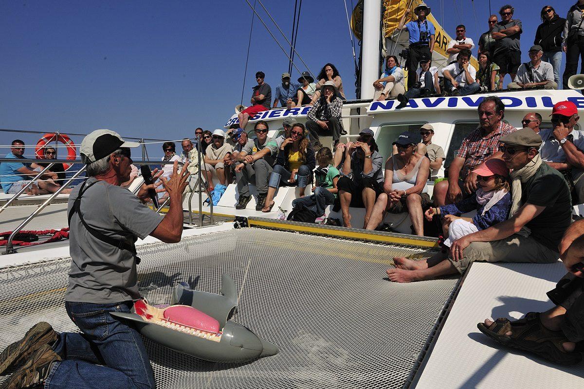 catamaran navivoile sortie a la rencontre du grand dauphin au depart de port vendres ou canet en roussillon explications public biologie du grand dauphin