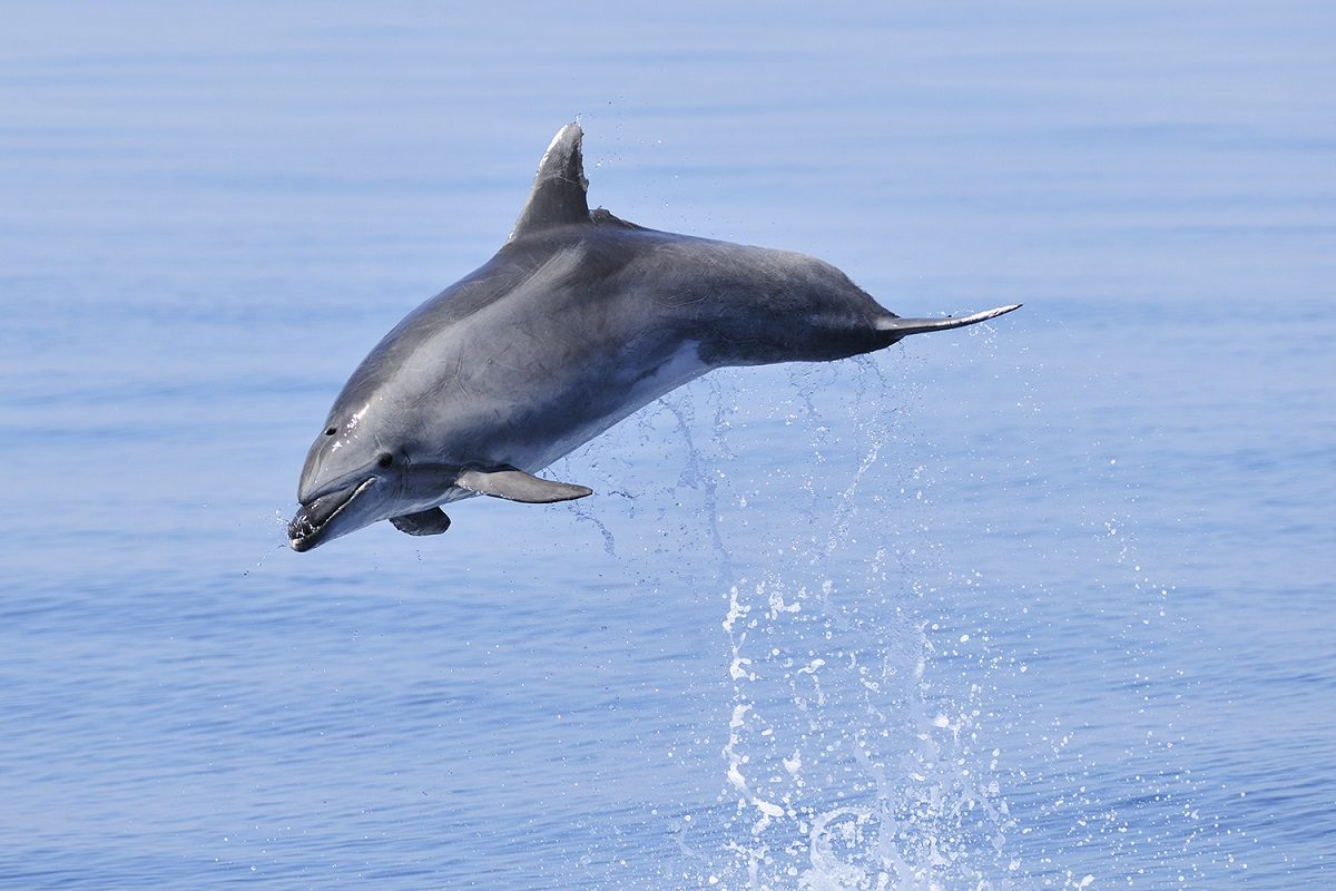 catamaran navivoile sortie a la rencontre du grand dauphin au depart de port vendres ou canet en roussillon jump grand dauphin