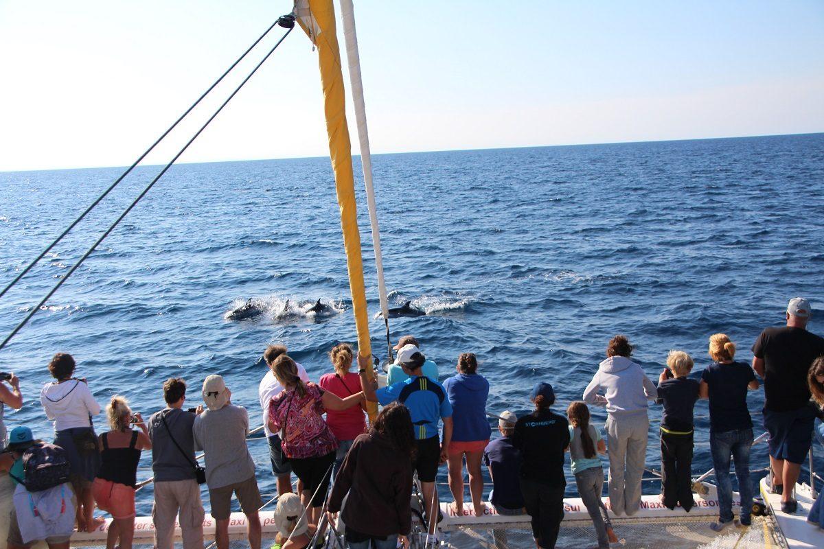 catamaran navivoile sortie a la rencontre du grand dauphin au depart de port vendres ou canet en roussillon observation grands dauphins avec passagers aux etraves
