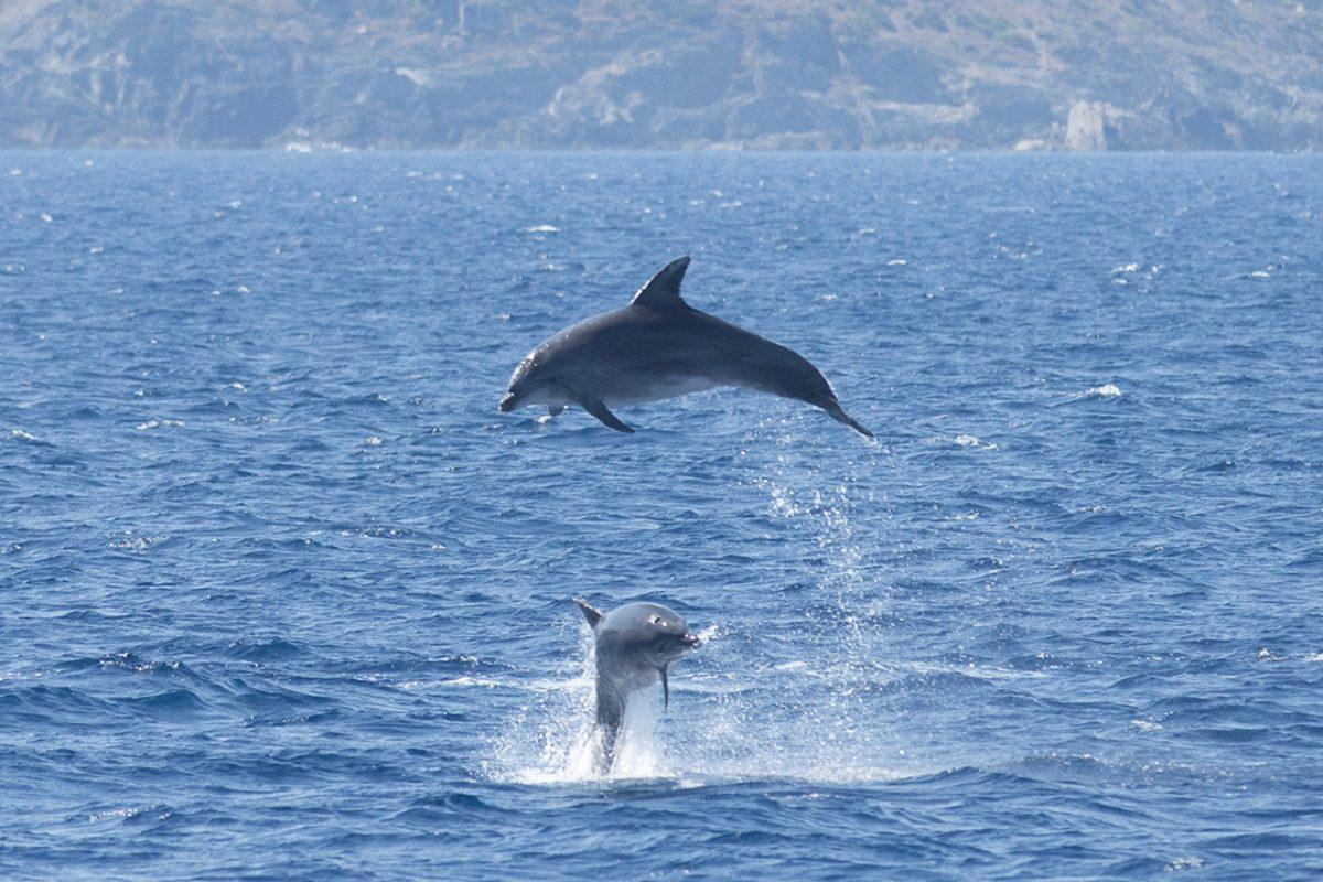 catamaran navivoile sortie a la rencontre du grand dauphin au depart de port vendres ou canet en roussillon observation grands dauphins devant cote vermeille