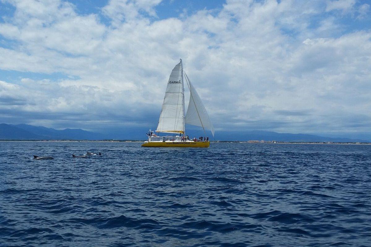 catamaran navivoile sortie a la rencontre du grand dauphin au depart de port vendres ou canet en roussillon observation grands dauphins sous voiles