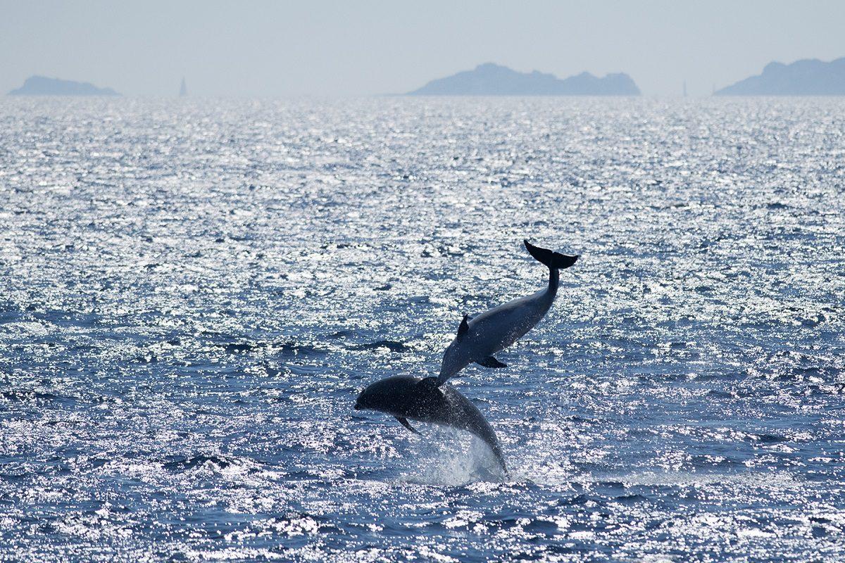 catamaran navivoile sortie a la rencontre du grand dauphin au depart de port vendres ou canet en roussillon observation sauts de grands dauphins au large de cap de creus