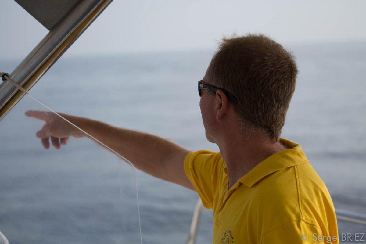 catamaran navivoile sortie a la rencontre du grand dauphin au depart de port vendres ou canet en roussillon reperage cetace