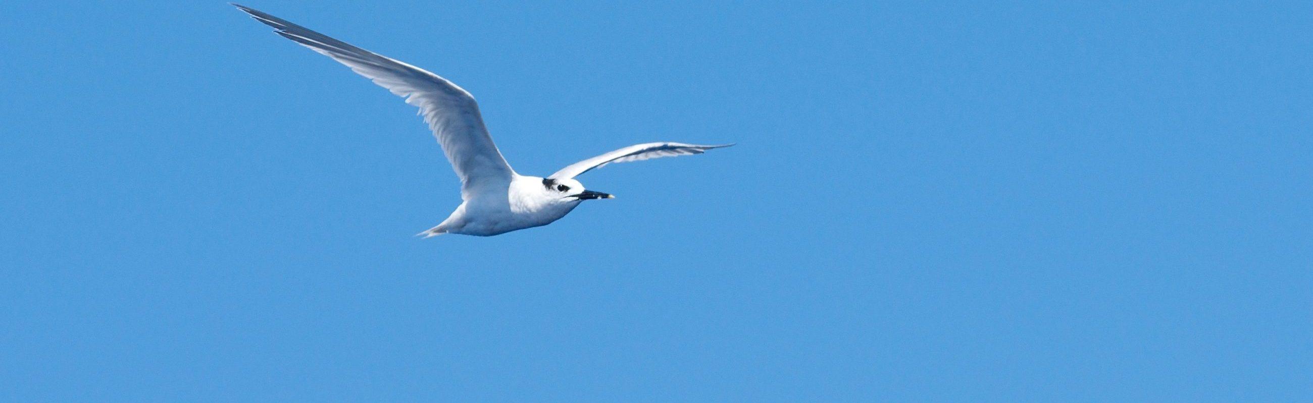 catamaran navivoile sortie oiseaux de mer au depart de canet en roussillon