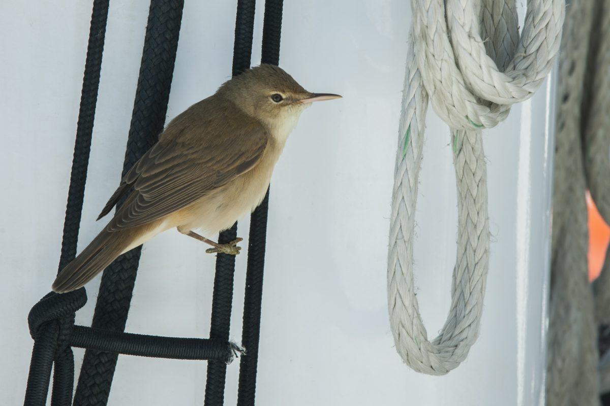 catamaran navivoile sortie oiseaux de mer au depart de canet en roussillon observation passereau en migration au repos a bord du navire