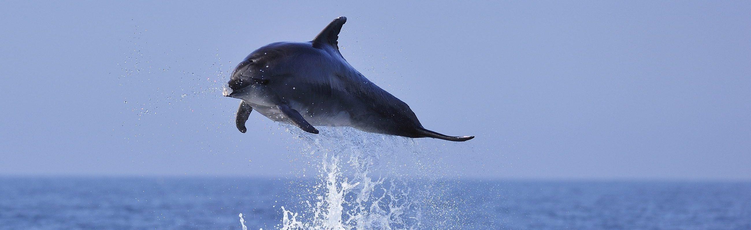 catamaran navivoile bon cadeau à la rencontre du grand dauphin dans les pyrénées orientales