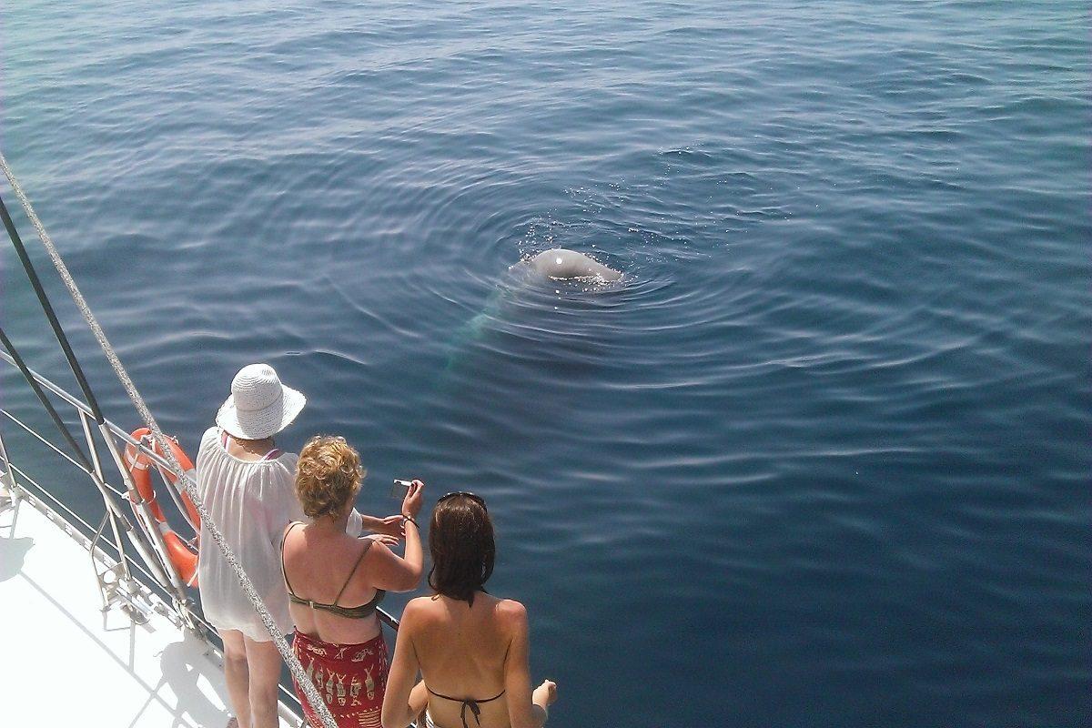 catamaran navivoile bon cadeau chante avec les dauphins au départ de canet en roussillon dans les pyrénées orientales