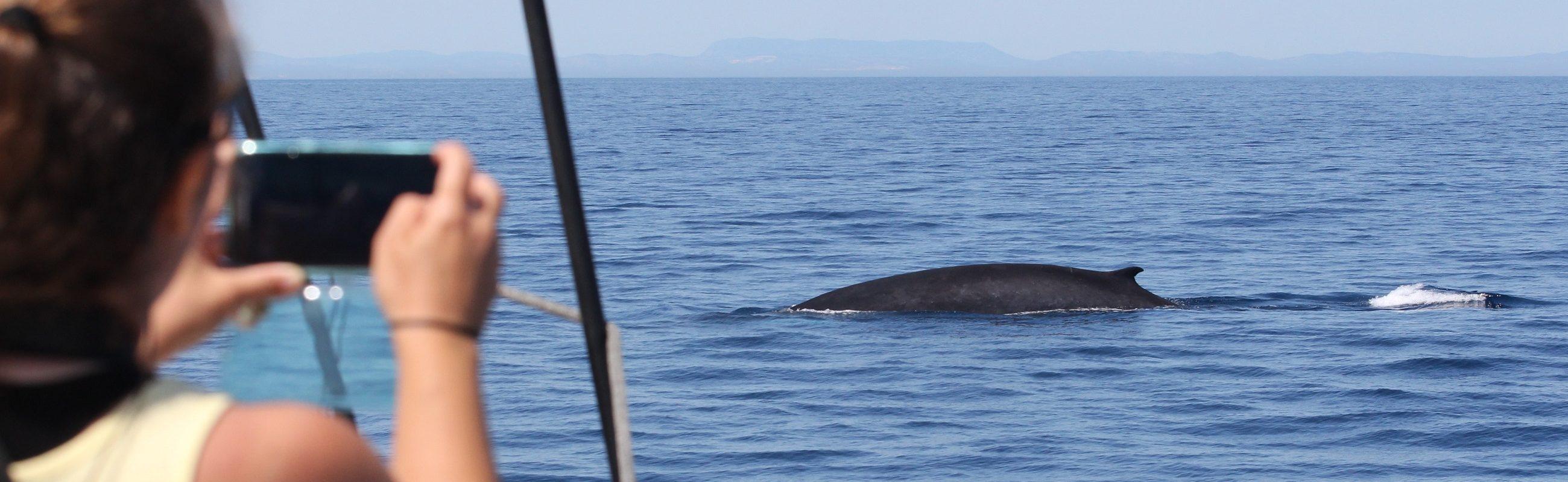 catamaran navivoile croisière observation baleines et dauphins au départ de canet en roussillon