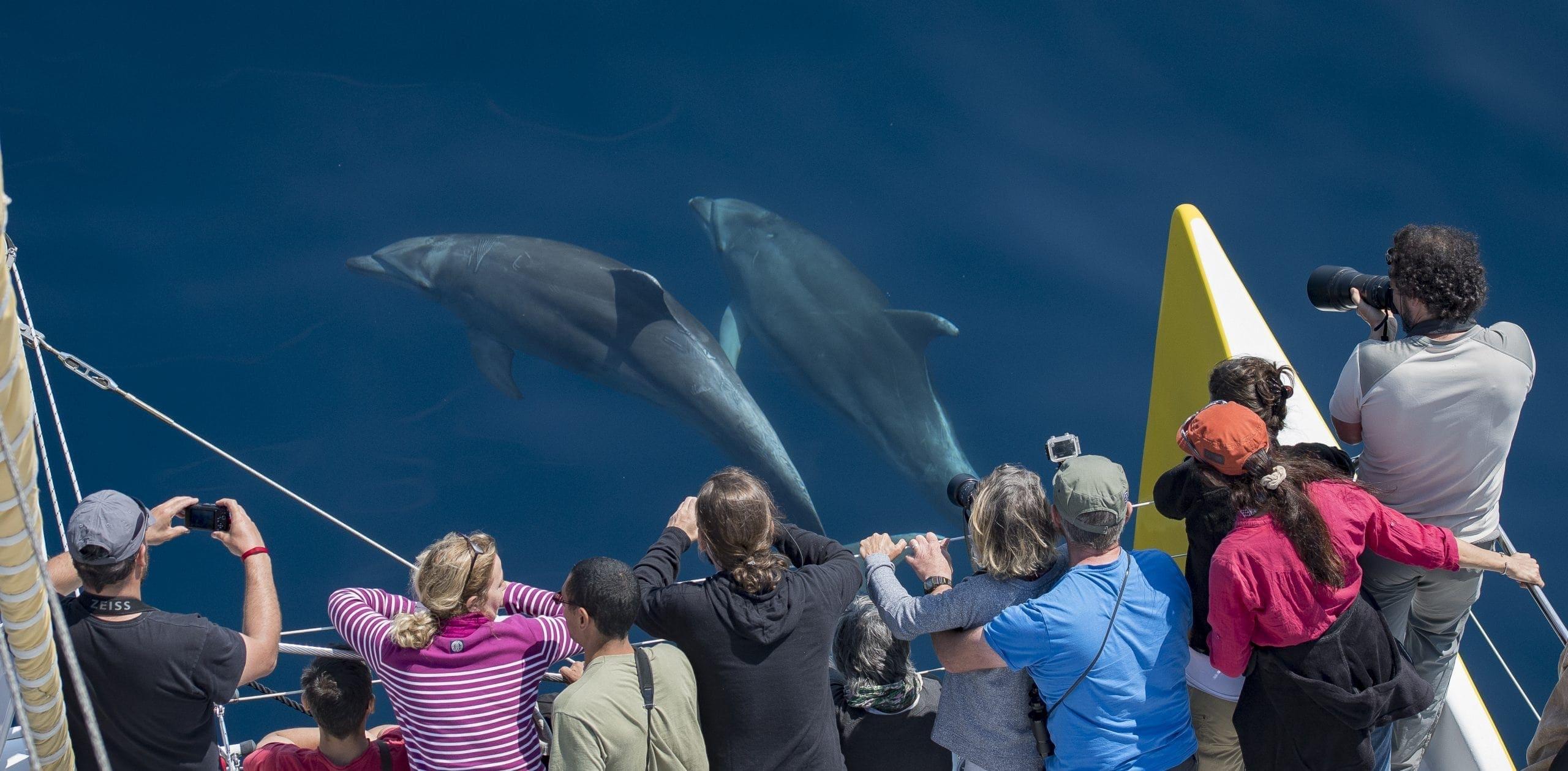 grands dauphins aux étraves du catamaran navivoile canet en roussillon port vendres