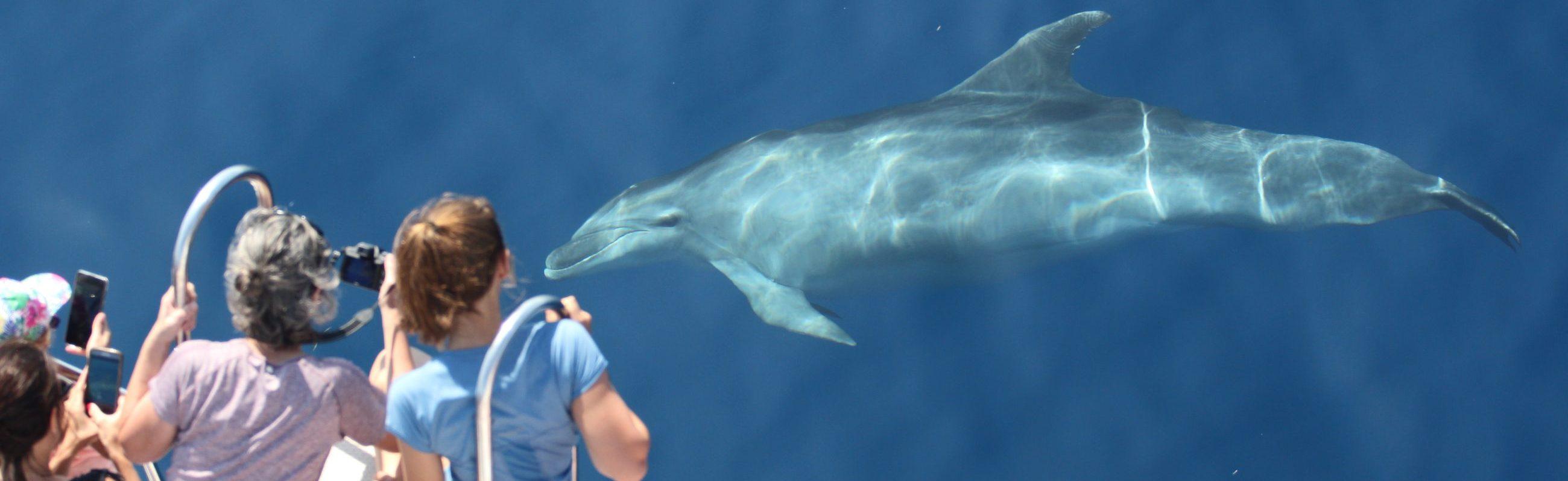croisière découverte du grand dauphin au départ de canet en roussillon étrave du catamaran navivoile