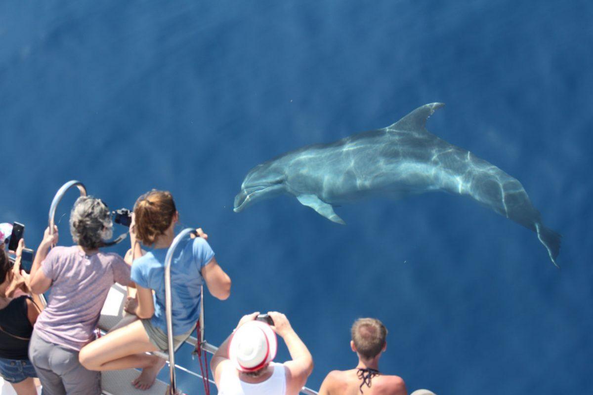 découverte du grand dauphin sous les yeux des passagers du catamaran navivoile au départ de port vendres