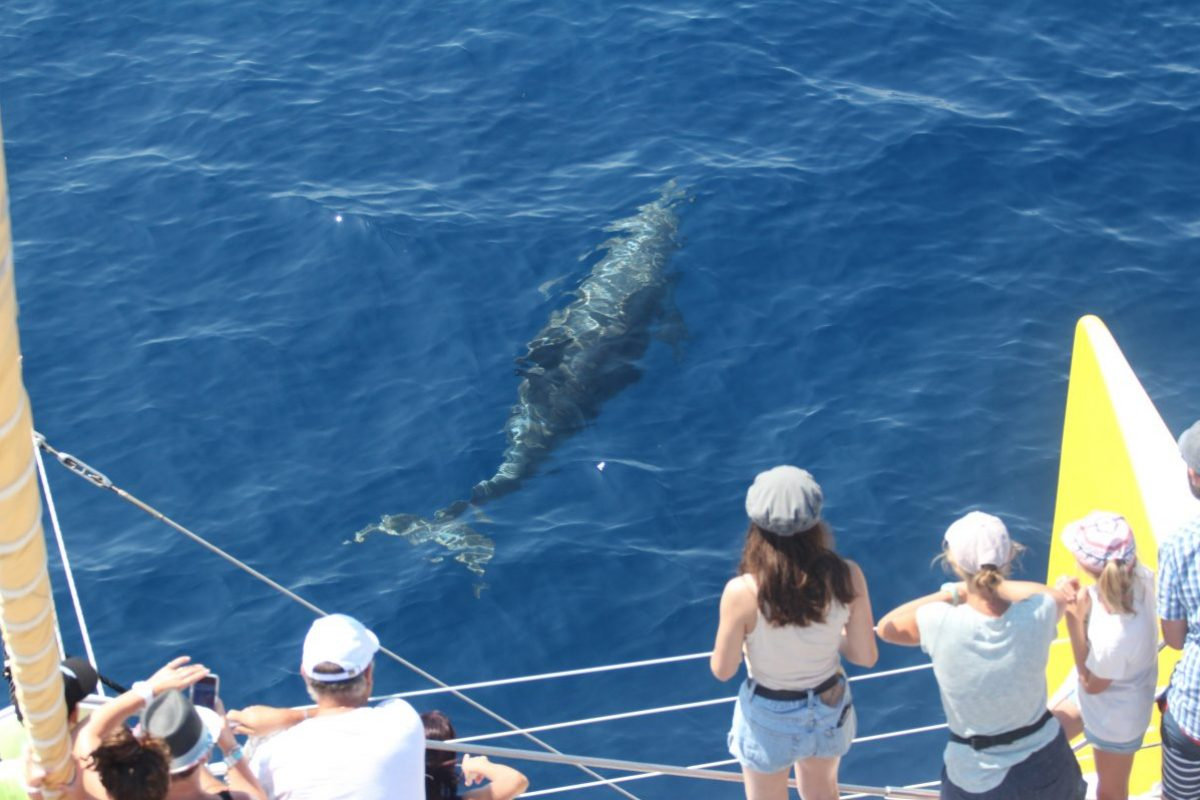 un invité surprise au cours d'une croisière découverte baleines et dauphins au large de canet en roussillon à bord du navivoile