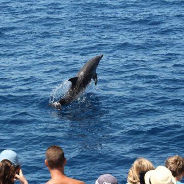 observation du grand dauphin au départ de canet en roussillon à bord du catamaran navivoile